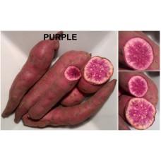 Батат сорт Фиолетовый черенок