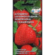 Клубника (крупноплодная земляника) Сашенька
